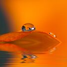 Misty Orange Reflections by Trudy Wilkerson