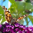 Butterfly and Bubbles  by JanDeA