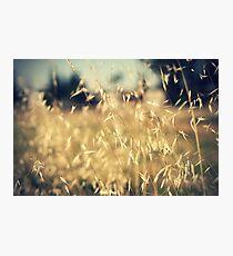 Dry Grass Photographic Print