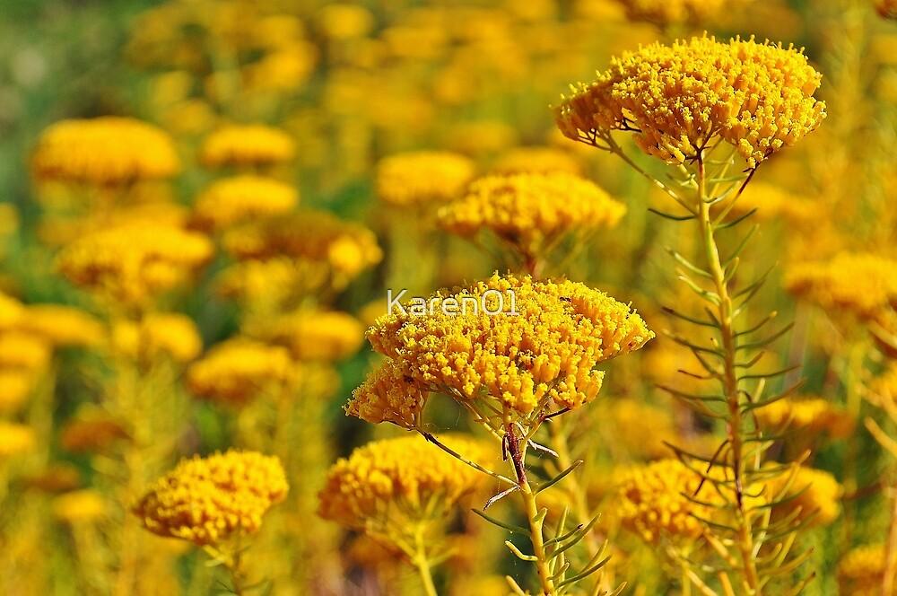 Flowering sunshine by Karen01