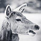 Talking Deer by Liz Scott
