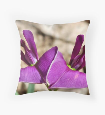 OTOPTERA BURCHELLII – beesboontjie Throw Pillow