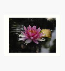 pond lilly Art Print