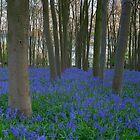 The Blue Path by Nick Atkin