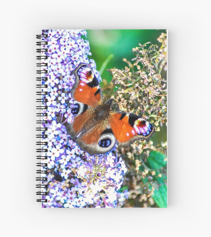 Butterfly by Paul Biddles