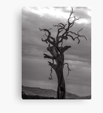 Bedraggled Canvas Print