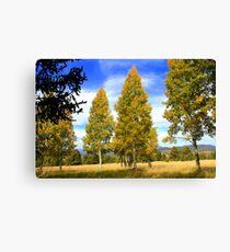 Aspen Trees - Arizona Canvas Print