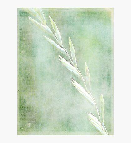 New Grass Photographic Print