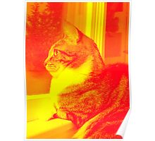 Fire Kitty Poster