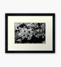 Japan Sakura - Somei Yoshino (Monochrome) Framed Print