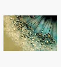 Delicious Dandy Drops Photographic Print