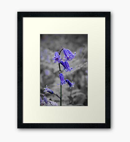 English Bluebell Framed Print