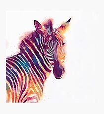 The Aesthetic - Watercolor Zebra Illustration Photographic Print