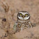 Hoo's There? by Sue  Cullumber