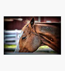 Equine Photographic Print