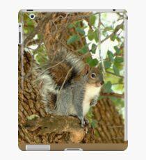 Western Grey Squirrel In A Tree iPad-Hülle & Klebefolie
