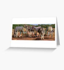 Zebras in the Dust Greeting Card