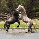 The Stallions by Saija  Lehtonen