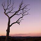 Evening Is Nigh by Erin Davis