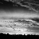 Light Of Winter by Erin Davis