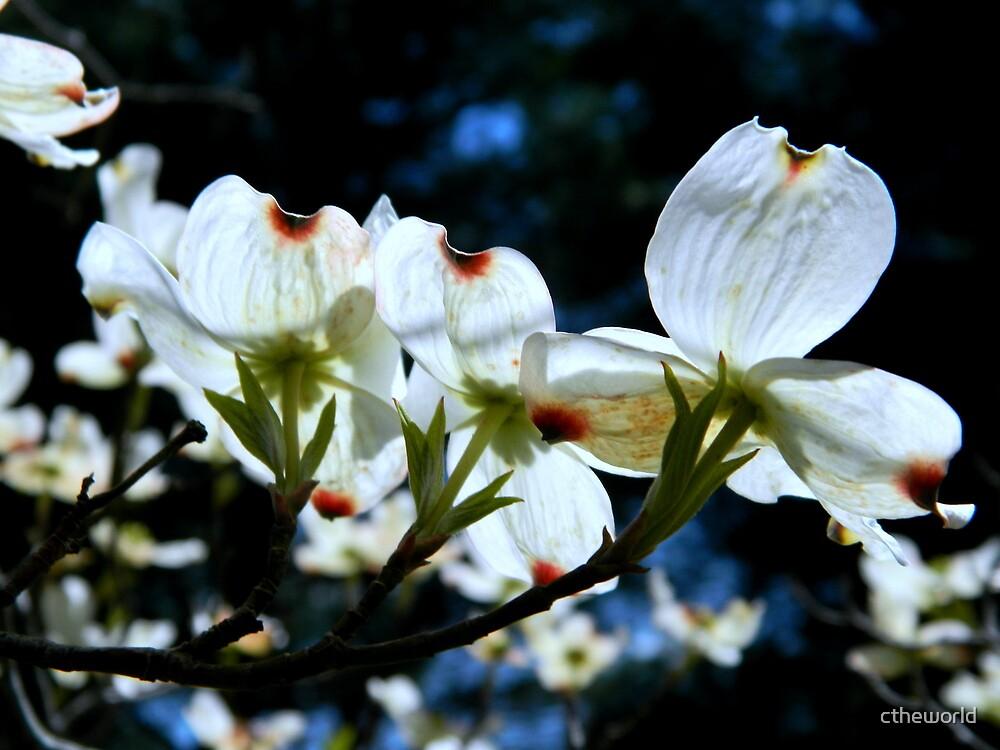 Spring Walk - III by ctheworld