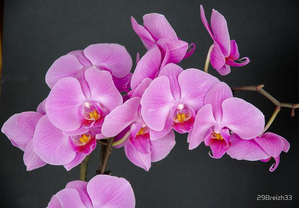 Orchidaceae by 29Breizh33