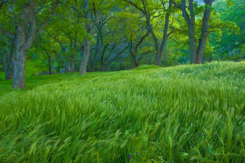 Tall Grass at Twilight by marccrumpler