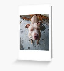 Give Me Treats Greeting Card