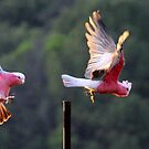 Pink and Grey Galah's  by Trish Threlfall