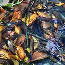 ©NS Fishes And Leafs IIA by OmarHernandez