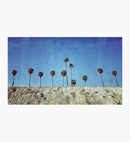 Bluff Palms Photographic Print