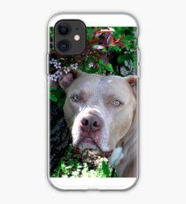 Portrait of a Pit Bull iPhone Case