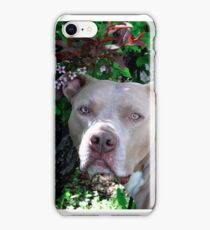 Portrait of a Pit Bull iPhone Case/Skin