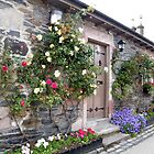 Climbing Roses by ElsT