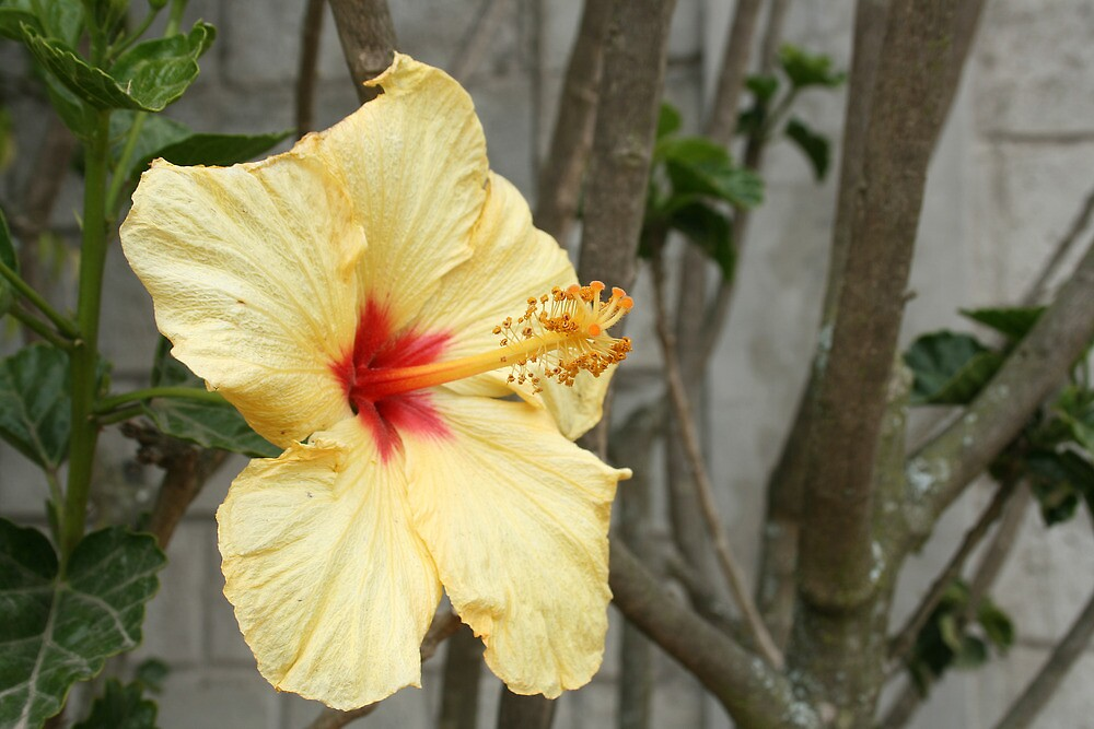 Yellow Flower on a Tree by rhamm