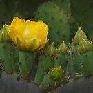 Flor de Nopal by Richard G Witham