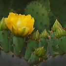 Flor de Nopal by Richard G Witham