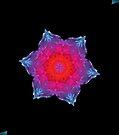 Neon Snowflake by Tori Snow
