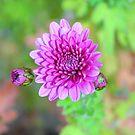 Flower , power.. by natgirl73