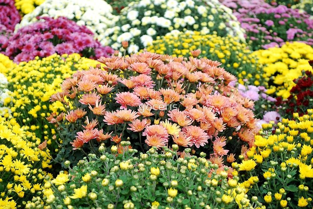 autumn colorful flower by goceris