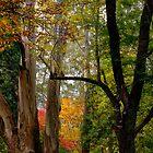 Autumn in Mt Wilson NSW by Ian English