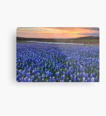 Texas Bluebonnet Images - Bluebonnet Sunrise in Texas Metal Print