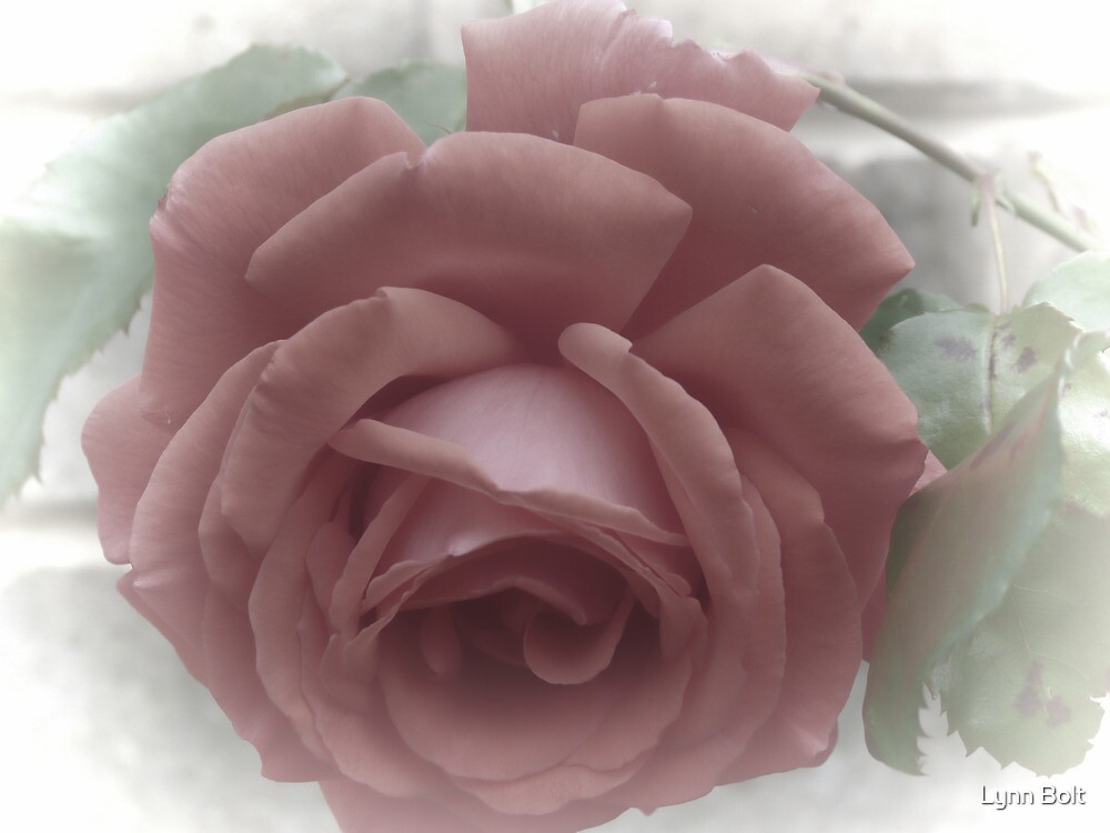 Faded Red Rose by Lynn Bolt
