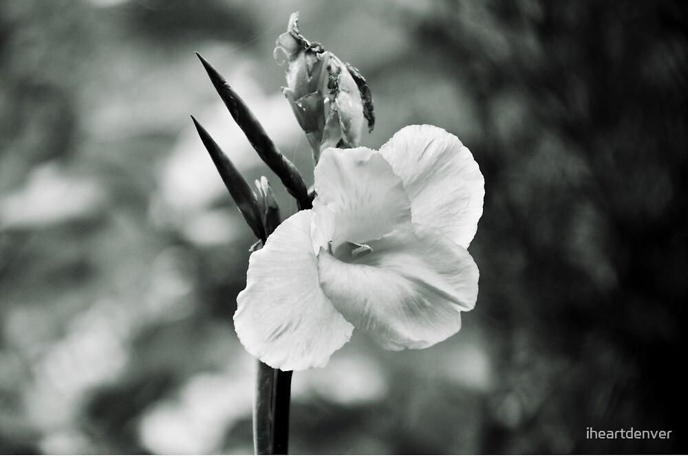Iris- Black and White by iheartdenver