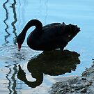 Black Swan by looneyatoms