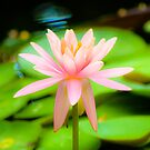 Perfect Lily by Alison Hill