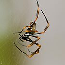 Spider up close by Alison Hill