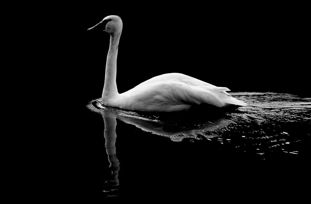 THE SWAN by RoseMarie747