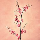 The Passion of Pink by RichCaspian