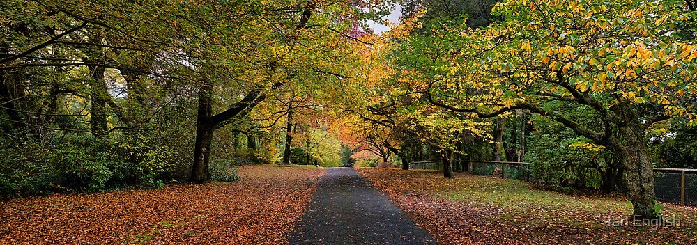Queens Avenue - Mt Wilson by Ian English